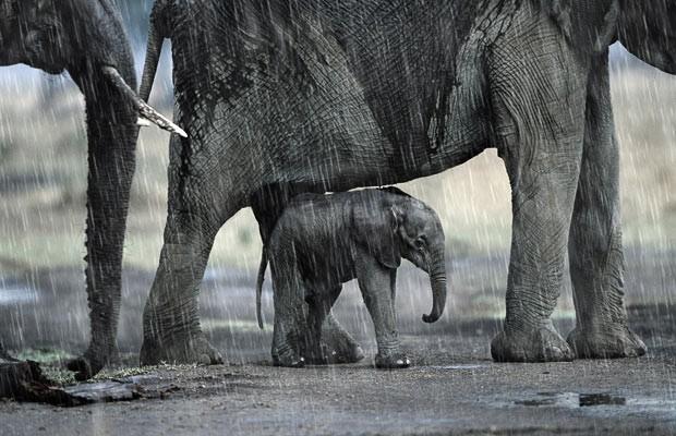 Elefantes-bajo-la-lluvia.jpg